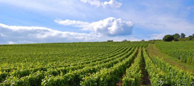 Diversifier votre patrimoine avec les vignes et forêts